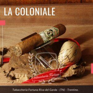 Flor de Carmen Robusto. Un sigaro Dolce, morbido, che sprigiona aromi di legno di cedro.Sentori mandorla amara, miele di castagno.