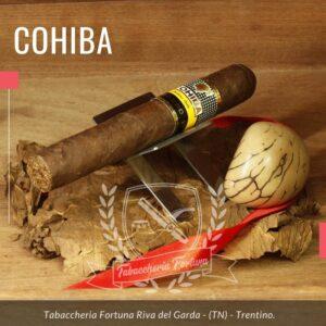 Il Genios è il sigaro più importante di questa linea. Le dimensioni, la composizione del ripieno e certamente anche questa ricchissima capa invecchiata 5 anni, gli conferiscono una palette aromatica unica nel suo genere.