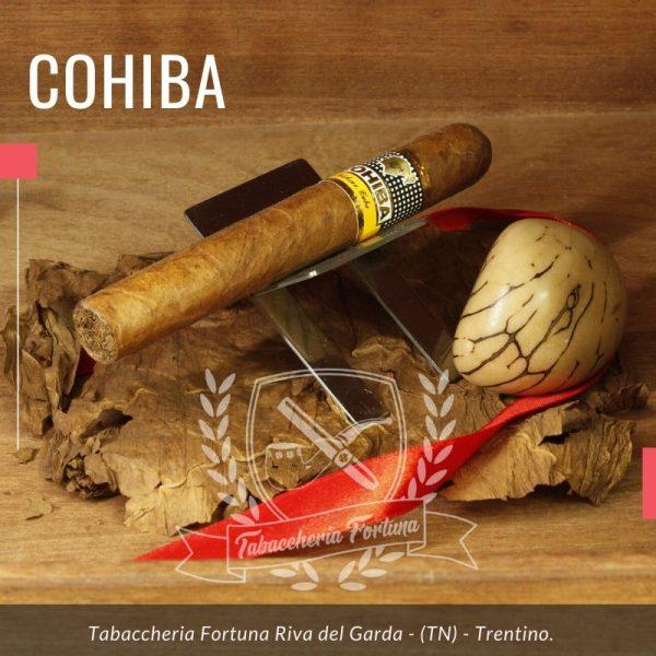 Cohiba siglo II A crudo arrivano sentori di Cacao e legno.